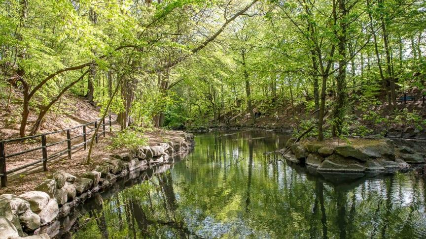 Jordbodalen med den porlande Gåsebäcken är ett naturreservat centralt i staden
