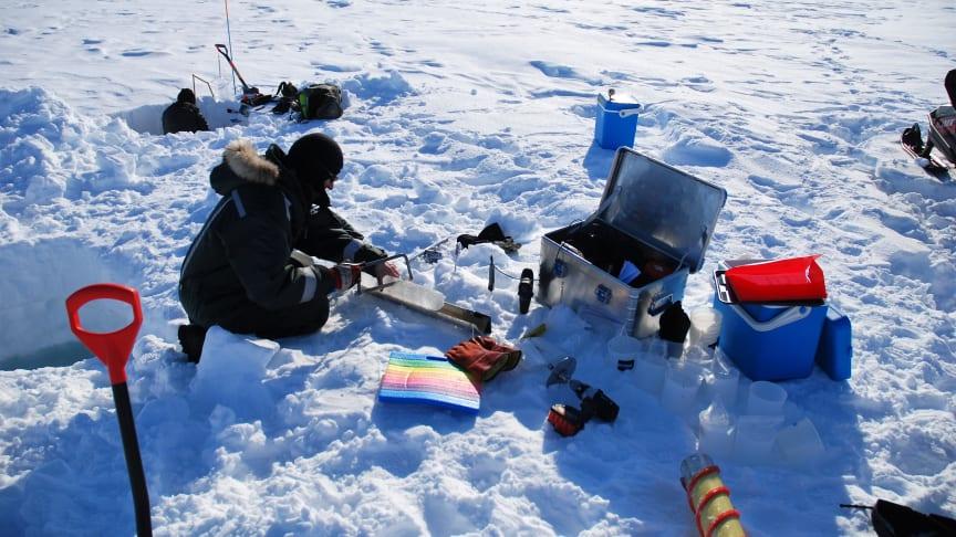 Temperaturen i Nordøstgrønland kan i mai måned komme ned på –20 oC og forskerne må være godt påkledd når laboratoriet er lagt til overflaten av havisen. (Foto: Kasper Hancke)