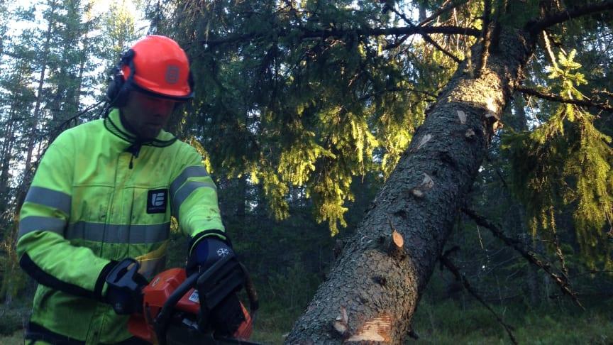 Så hjälper Umeå Energi kunderna efter stormen – vissa har rätt till avbrottsersättning