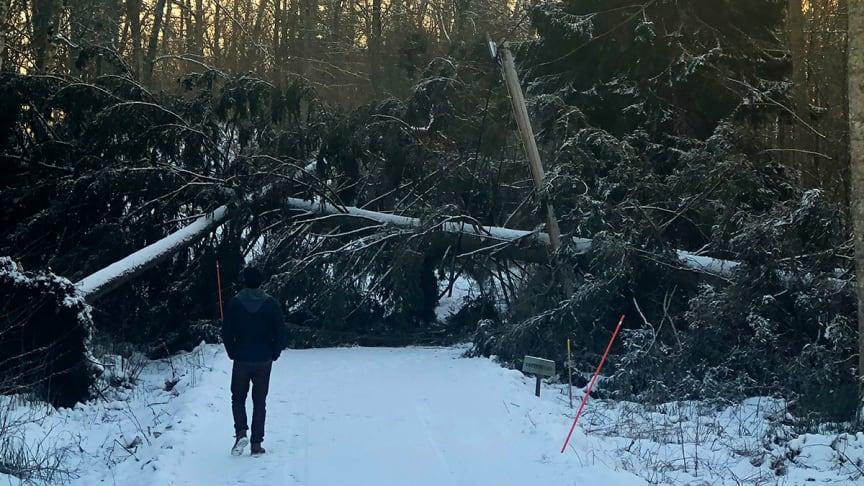 Stormen orsakade många skador på såväl hus som staket och häckar.