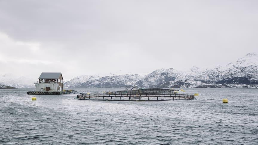 Et av Nordlaks' oppdrettsanlegg (Foto: Marius Fiskum / Norges sjømatråd)
