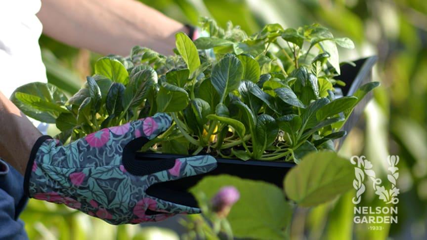 Nelson Garden lanserar trädgårdshandskar i samarbete med illustratören Gunnel Ginsburg