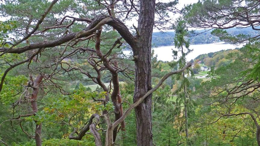 Korsviken, Ljungskile. Foto: Svante Hultengren/Naturcentrum AB