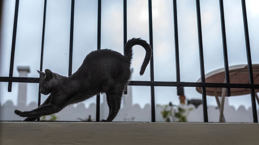 CATS Buenos Aires. Foto: Karl Melander