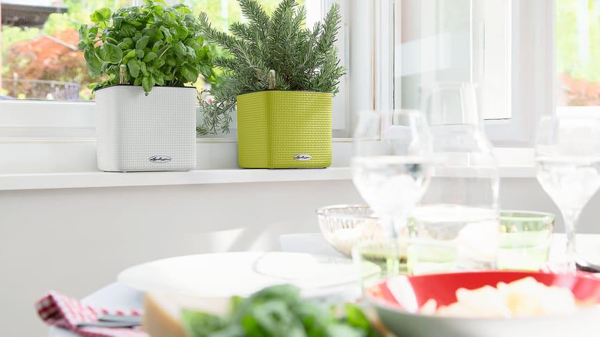 LECHUZA-Kräuterwürfel CUBE Color 16 - ideal für italienische Kräuter