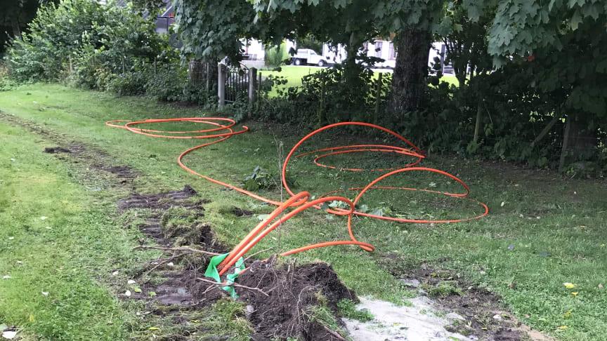 Den polisanmälda bredbandsaktören har i sin framfart kapat elledningar, belysningskablar och skadad träd och växtlighet.