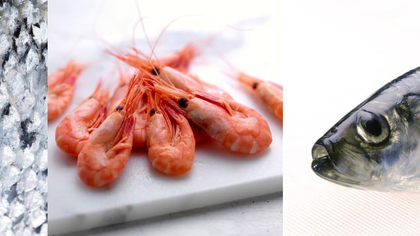 Kina senker tollsatser for sjømat