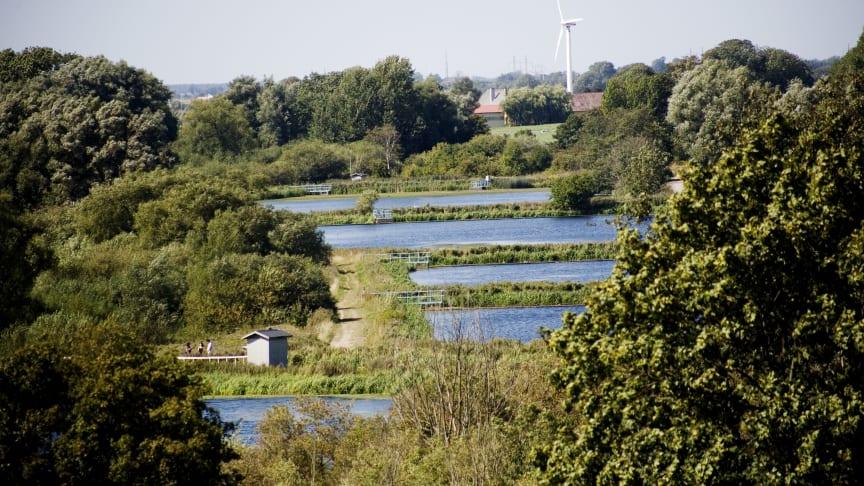 Vy över dammarna vid Källby avloppsreningsverk