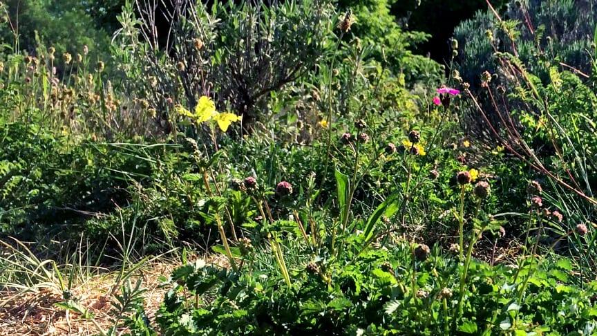Blüte oder Schmetterling? An der Trockenmauer im Osten des Goetheanum-Gartenparks (Foto: Sebastian Jüngel)