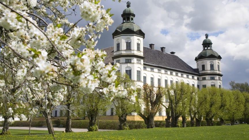 Vår på slottet! Äppelträden blommar och lindallén grönskar under maj månad.