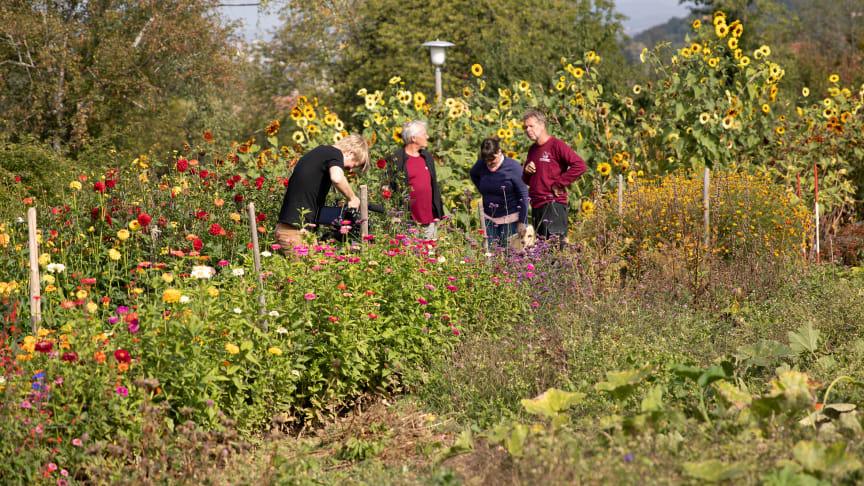 Goetheanum Gartenpark (Foto: Jasmin Peschke)