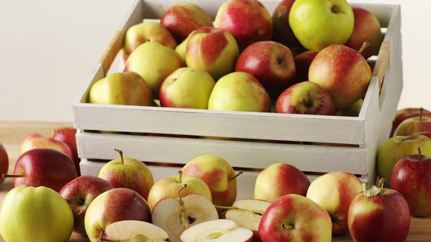 RP Frukt inviger ny produktionsanläggning i Hässleholm