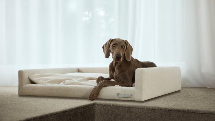 Nu lanserar Carpe Diem Beds lyxig hundsäng och exklusiva fotpallar