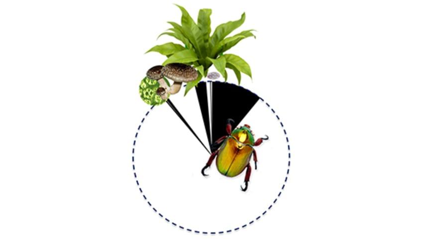 Av världens arter uppskattas hela 80 procent ännu vara okända. Bilden visar det ungefärliga antalet kända (svarta) vs okända (vita) arter till lands för alger, svampar, växter, protister och djur, enligt Mora m.fl. 2011. PLoS Biol 9(8): e1001127.