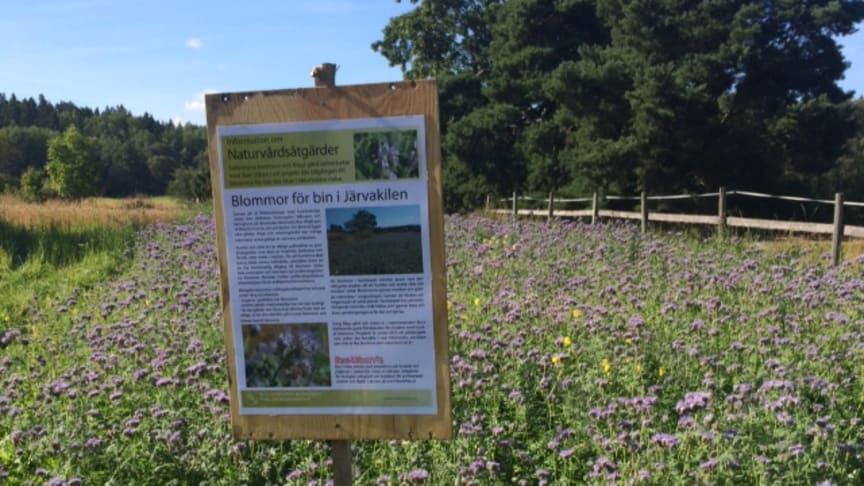 Blommor för bin! WWF beviljar stöd till Bee Urban för att hjälpa bina att få mer mat på landet.