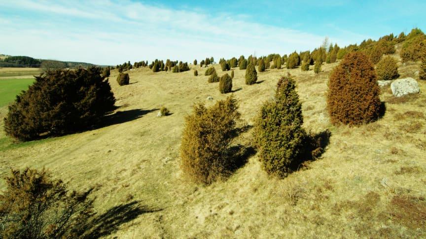 Gräsmarker vid Lindbacke, Nyköping. Foto: Alistair Auffret