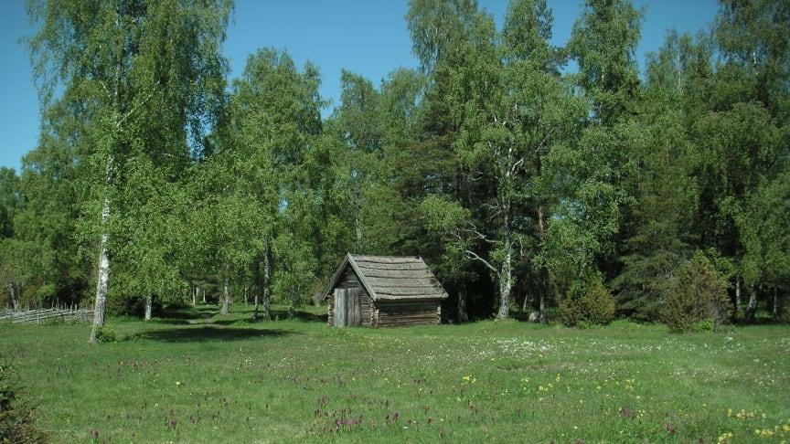 Det gamla jordbrukslandskapet Ängskär - skyddad naturbetesmark i norra Uppland. (Foto: Jan Bengtsson, SLU)