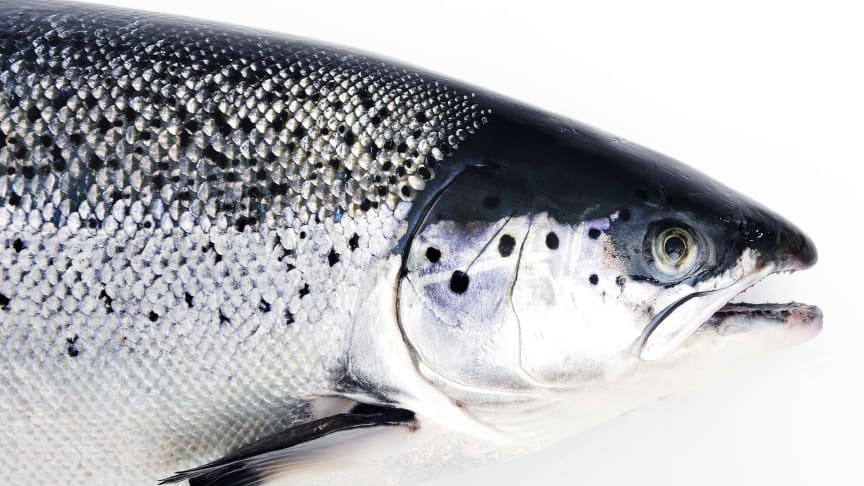 Best month ever for Norwegian seafood exports
