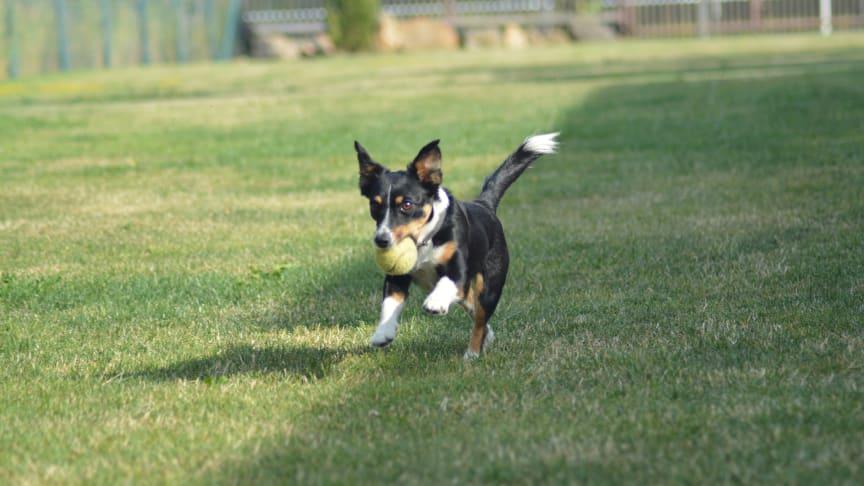 DA Direkt tritt mit einer innovativen Tierkrankenversicherung in ein neues Marktsegment ein