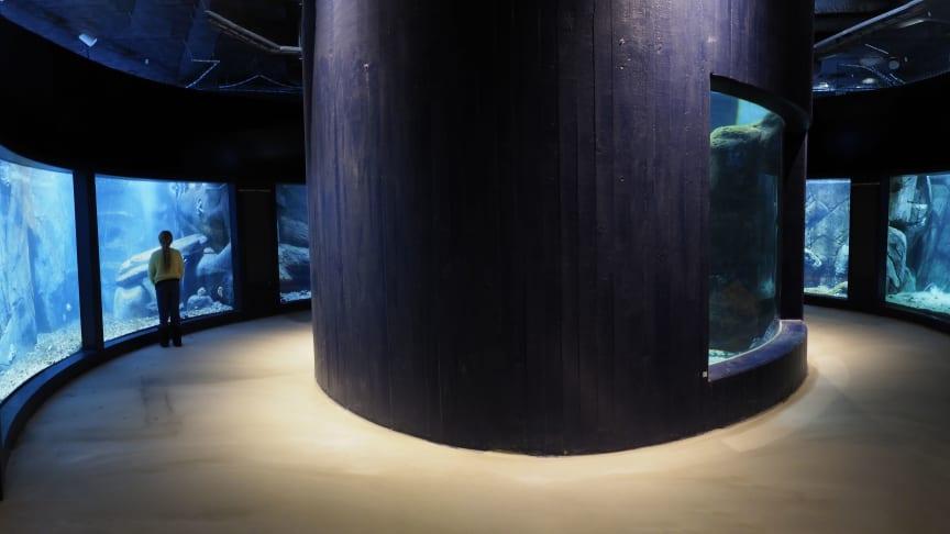 Nya akvarier på Havets Hus, foto: Roger Jansson / Havets Hus