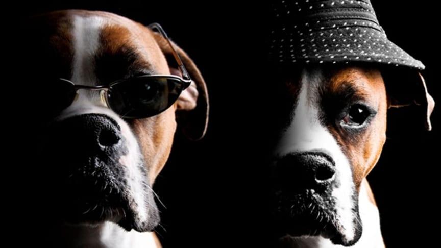Fyrverkerifritt nyår för hundar på Clarion Hotel Arlanda Airport - succén är tillbaka