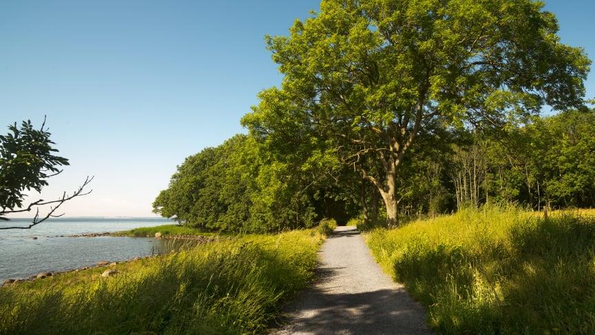 Søndre Jeløy landskapsvernområde blir ny hovedarena for Momentumbiennalen. Foto: Eivind Lauritzen / Momentum