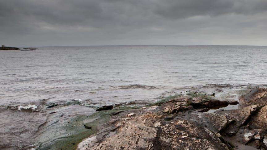 Foto: Maja Stina Nylander