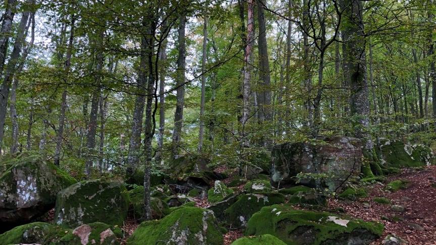 Kanske är skogen stresshormonernas värsta fiende?