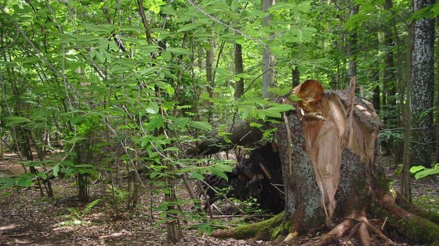 Calluna fortsätter att driva projekt EcoComp, en handelsplattform för ekologisk kompensation och naturbaserad klimatkompensation, en trovärdig och kostnadseffektiv lösning med verkliga åtgärder som gynnar biologisk mångfald i svensk natur.
