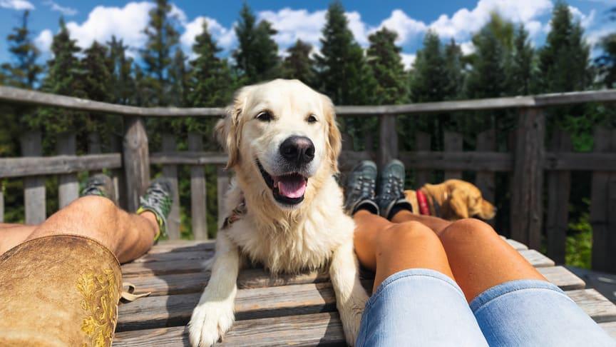 Mit der richtigen Vorbereitung gelingt der unbeschwerte Urlaub für Mensch und Tier.