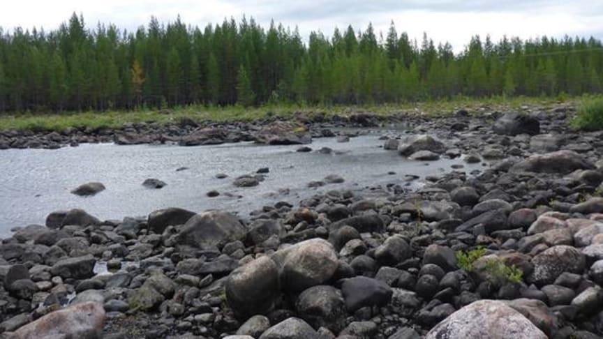 Grundforsens torrfåra, Umeälven. Foto: Åsa Widén