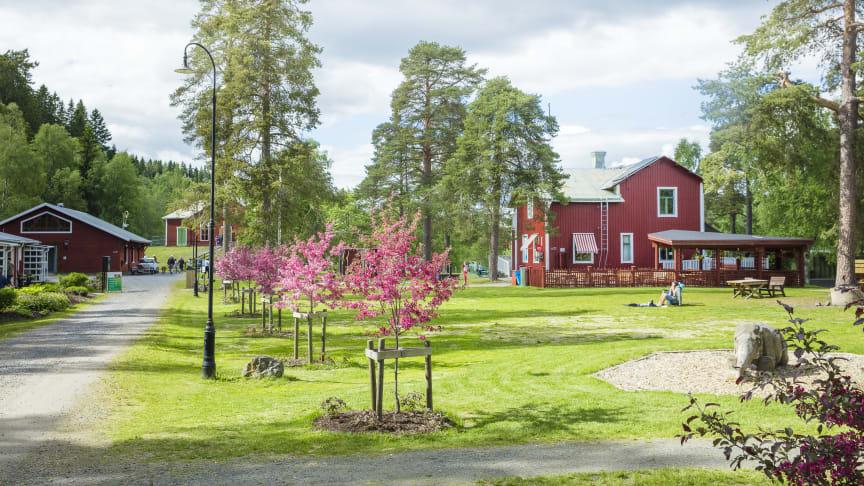 Den 12 juni öppnade Umeå Energicentrum i Klabböle – ett av sommar-Umeås populäraste besöksmål.
