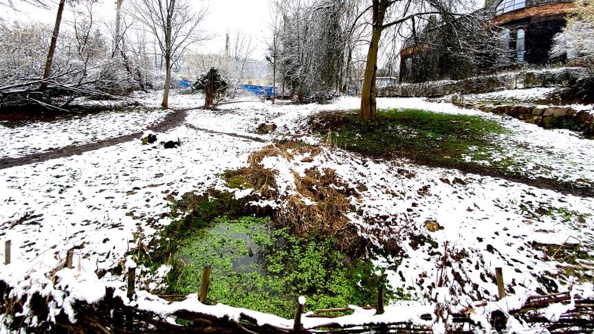 Schwinbach Aue im Schnee, Februar 2021 (Foto: Sebastian Jüngel)