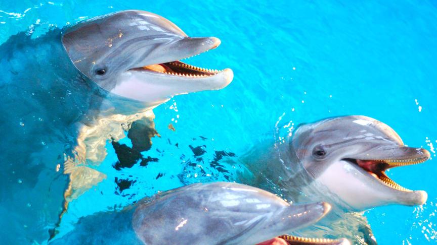 Mormor, mamma och son – tre generationer i Kolmårdens nya delfinshow
