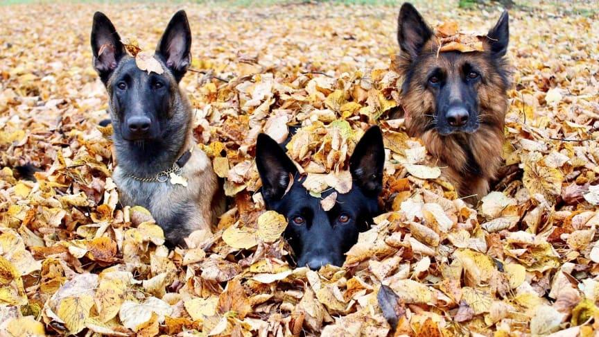 Snart är hösten här