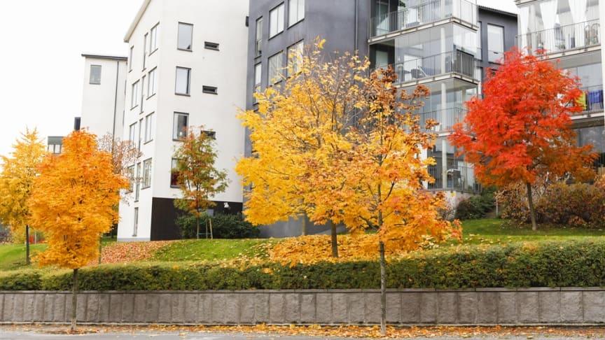 Priserna på bostadsrätter och villor ökade under oktober