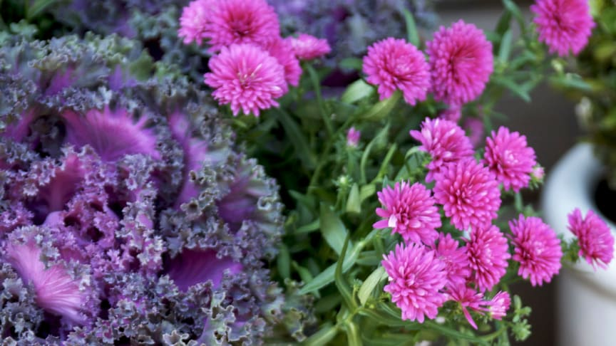 Månadens blomma - oktober 2011