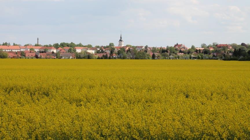 Die Skyline der Gemeinde Brandis. Foto/Rechte: Stadt Brandis