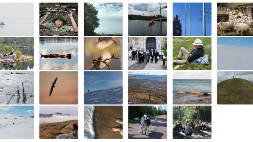 Några av bidragen till fotoklubbens månadstävling på temat FRIHET.
