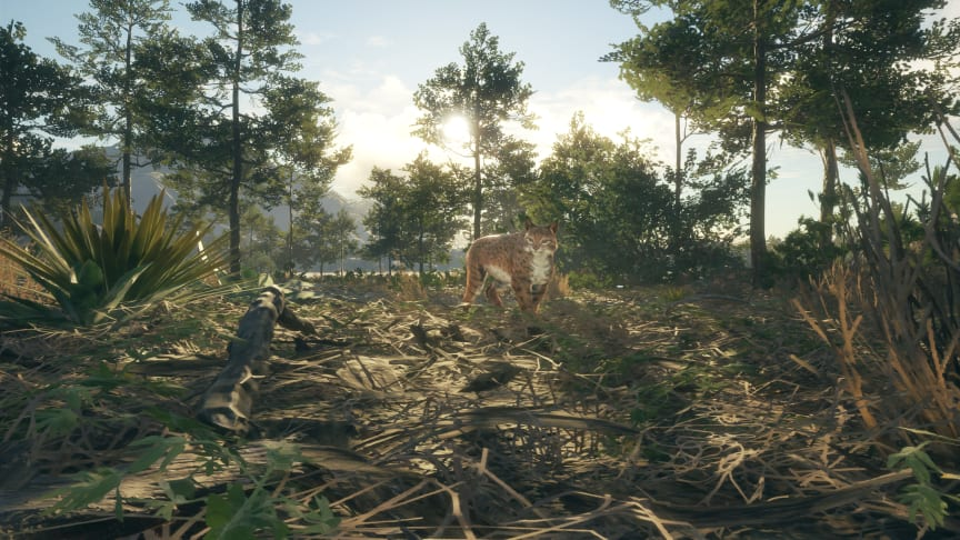 theHunter: Call of the Wild's New Reserve – Rancho del Arroyo – Is Now Available On Steam
