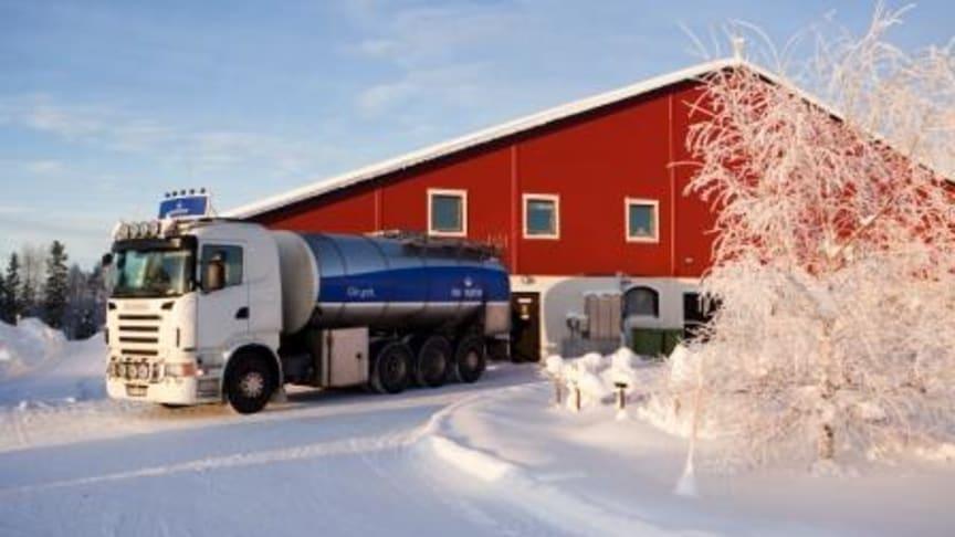 Jobben får norrlänningar att köpa lokalproducerat