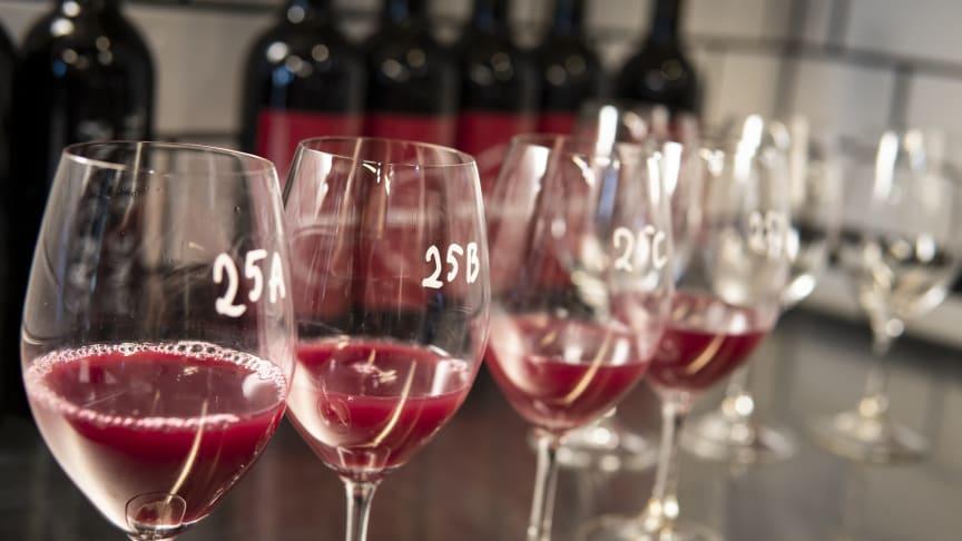 Jäsning - då börjar förvandlingen från must till vin