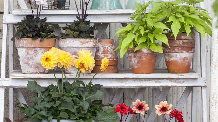 Starta dagen i Blomsterfrämjandets trendmonter!