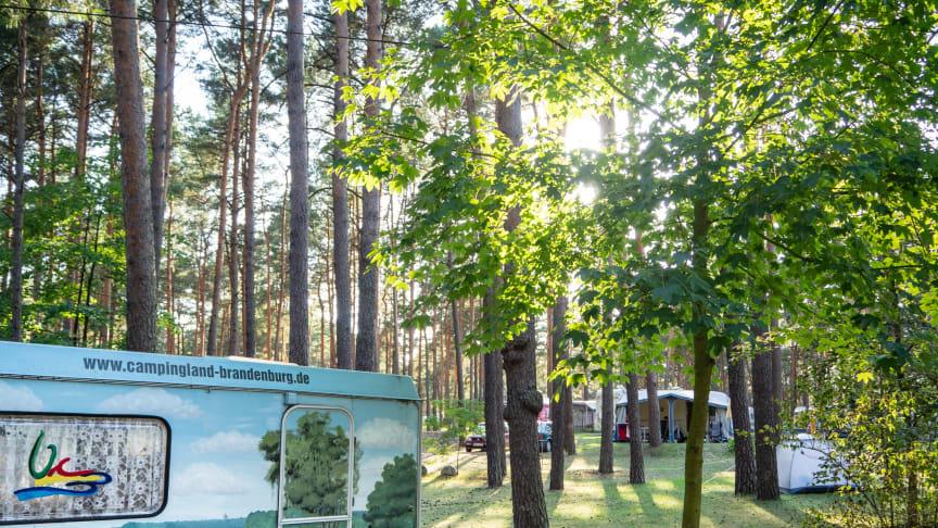 Für erholsamen und naturnahen Campingurlaub ist man in Brandenburg an der richtigen Adresse. Foto: TMB-Fotoarchiv/Steffen Lehmann.