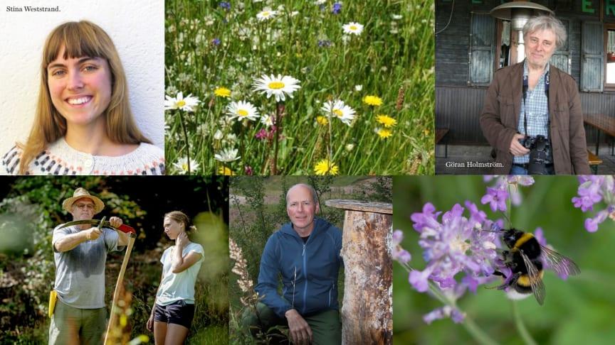 Söndag 10 februari handlar det om äng, humlor och pollinering hos Svenska Bin på Apiscandia.