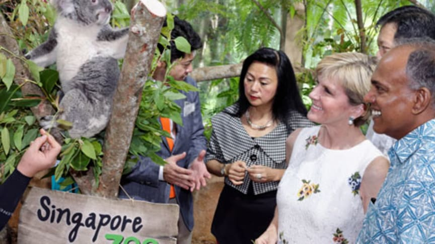 Singapore Welcomes the Koalas using Accoya Wood for their Abode