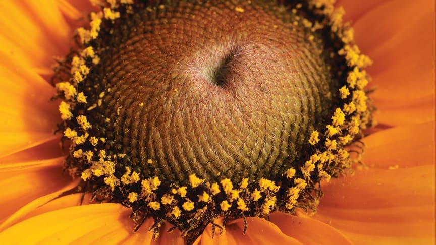 Månadens blomma - juli 2012