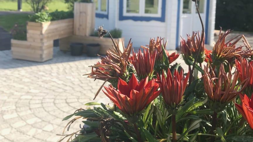 Sveriges första demensby invigs i Vellinge kommun