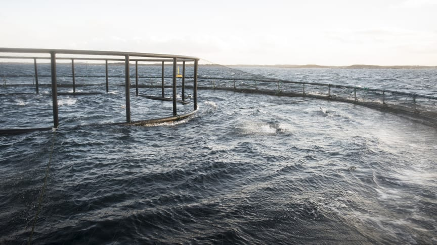 En av Måsøval Fiskeoppdretts merder
