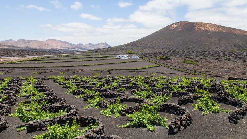 Lanzarote beeindruckt durch kilometerlange Sandstrände und bizarre Lavalandschaften. Das Weinanbaugebiet La Geria ist weltweit einzigartig. (Foto: Dimitri Houttemann/Pixabay)